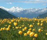 Zermatt-Field-of-Flowers